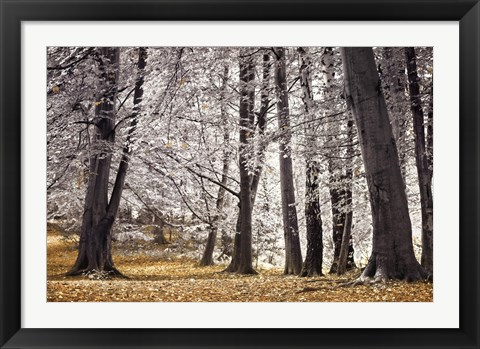 Framed Autumn Trees And Leaves Print