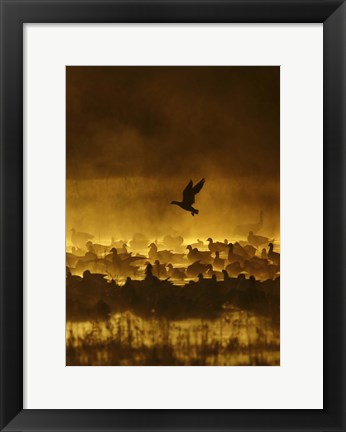 Framed Fire In The Mist Print
