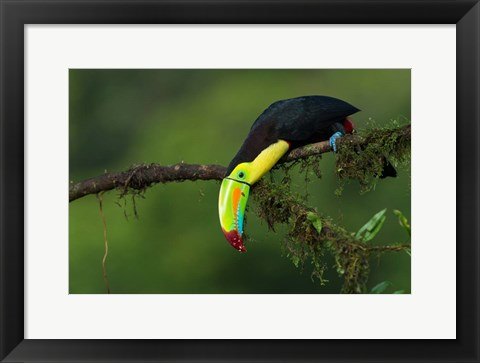Framed Colors Of Costa Rica Print