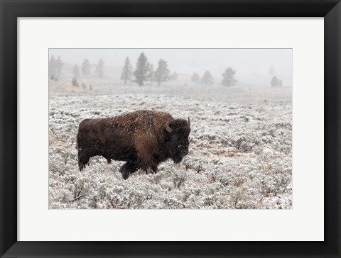 Framed Late Fall Yellowstone Print