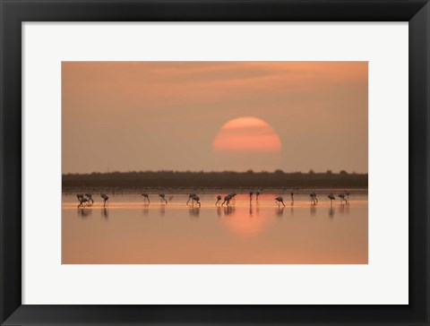 Framed Flamingos At Sunrise Print