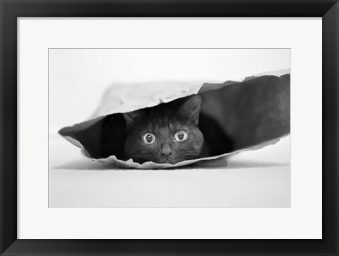 Framed Cat In A Bag Print