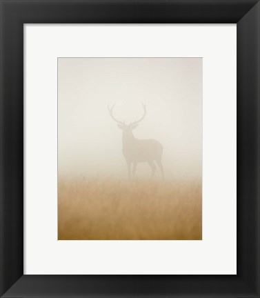 Framed Ghost Stag Print