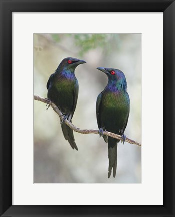 Framed Beautiful Couple Print