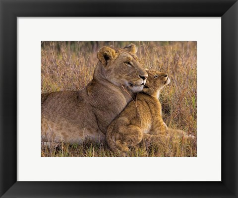 Framed Baby Lion With Mother Print