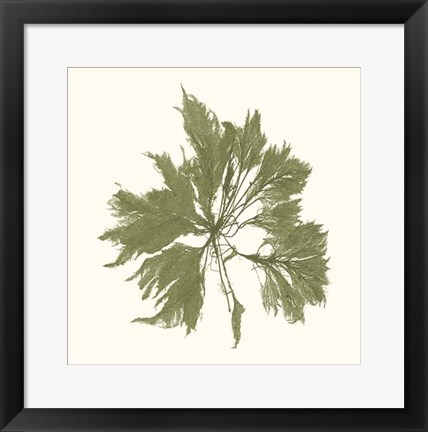 Framed Seaweed Collection III Print