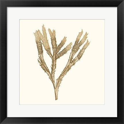Framed Seaweed Collection VIII Print