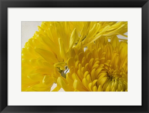 Framed Cremon Yellow Flowers Print