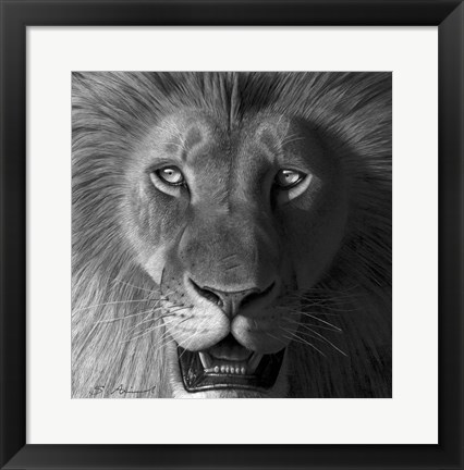 Framed Lion In The Morning Light Print