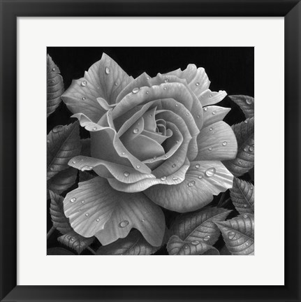 Framed Rose and Raindrops Print