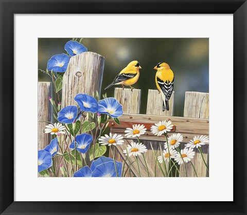 Framed Morning Glories and Finches Print