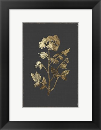 Framed Botanical Gold on Black II Print