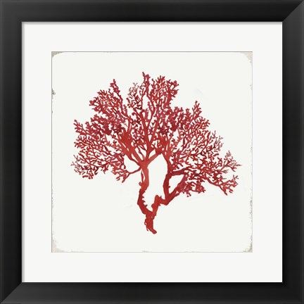 Framed Red Coral II Print