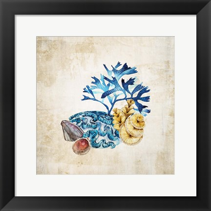 Framed Sea life II Print
