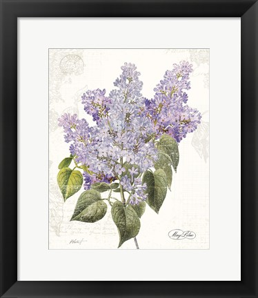 Framed May Lilac on White Print