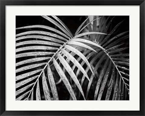 Framed Palm Fronds Print