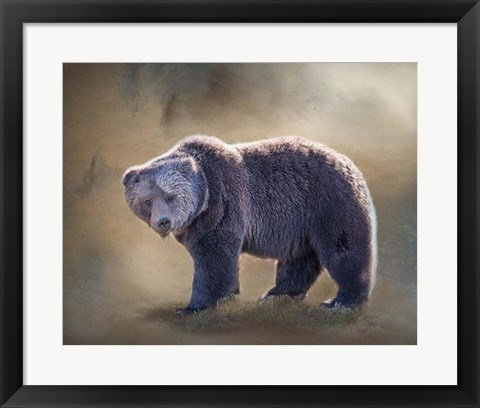 Framed Grizzly Bear Boar Print