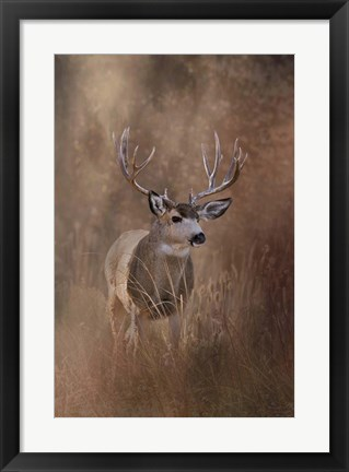 Framed Muley - Malheur Print