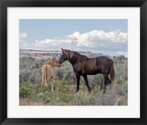 Framed Copper Pennys Foal & Juniper Print