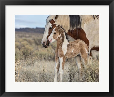 Framed Lady Braveheart & Filly Print