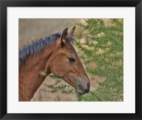 Framed Ochoco Foal & Larch Print