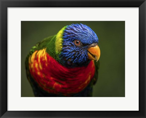 Framed Colorfull Bird II Print