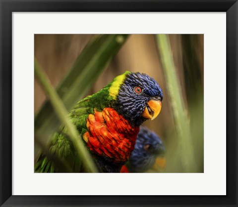 Framed Colorfull Bird IV Print