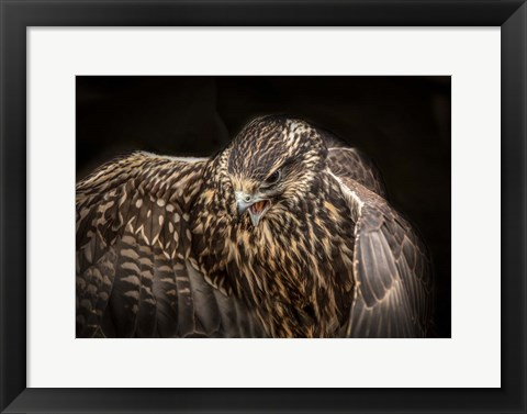Framed Wings Print