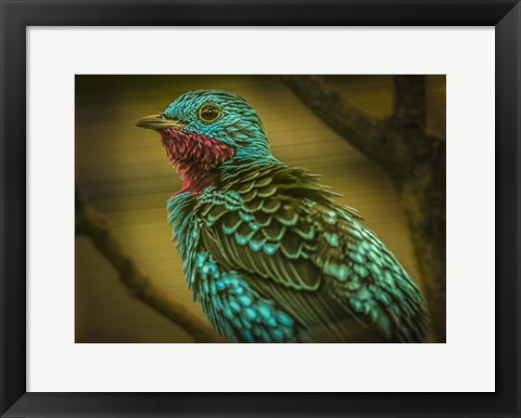 Framed Colorfull Bird V Print