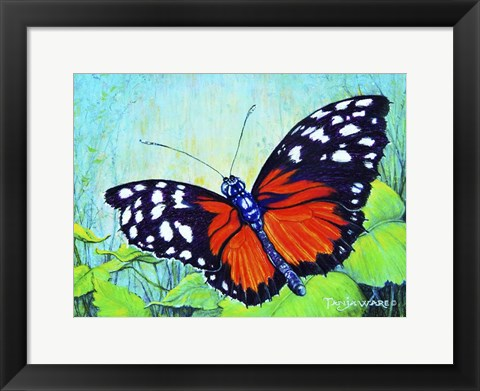 Framed Butterfly Beauty Print