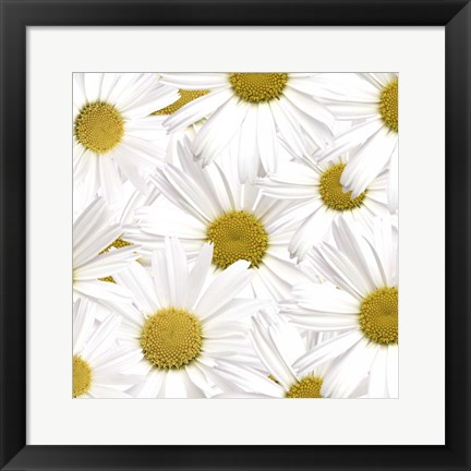 Framed Collection of Daisies Print