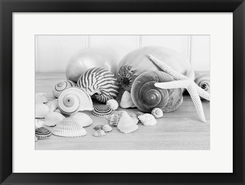 Framed Collection of Shells BW Print