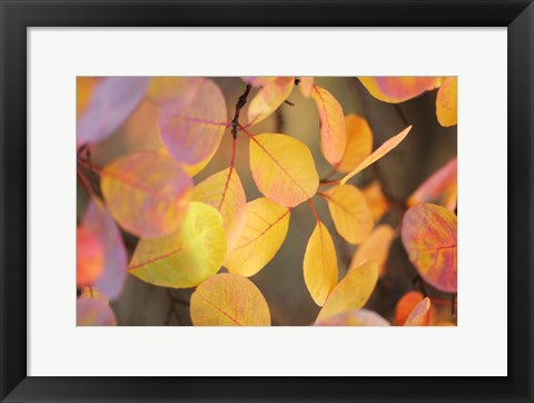 Framed Fall Leaves 2 Print