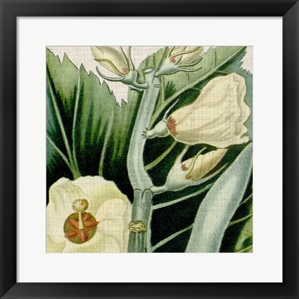 Framed Cropped Turpin Tropicals III Print