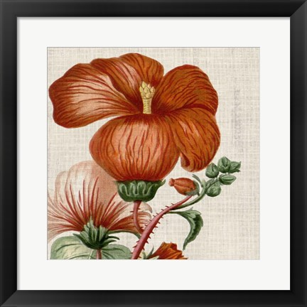 Framed Cropped Turpin Tropicals VIII Print
