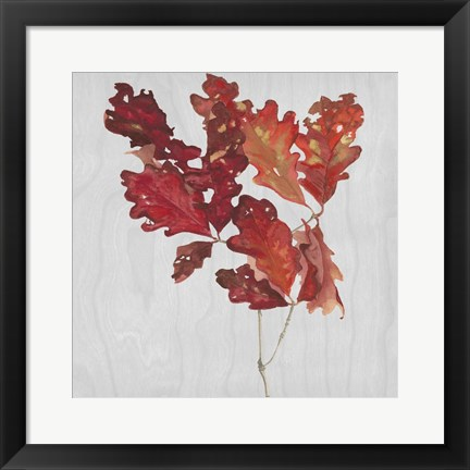 Framed Autumn Leaves VIII Print