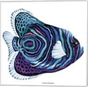 New Fish 3