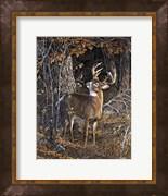 Deer Nibble