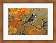 Whitethroated Sparrow