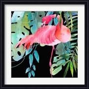 Brazil Flamingo