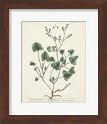 Antique Herbs VIII