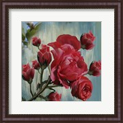Red Rose Bloom