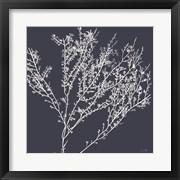 Sea Moss I