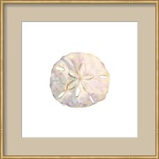 Oceanum Shells White IV-Sand Dollar