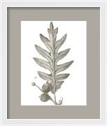 Histoire Naturelle Leaves I