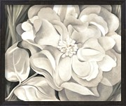 The White Calico Flower, 1931
