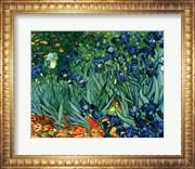 Irises in the Garden, Saint-Remy, c.1889