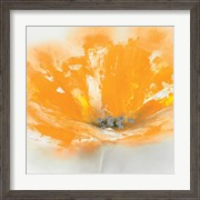 Wild Orange Sherbet I