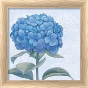 Blue Hydrangea III Crop