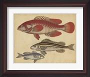 Species of Fish II